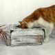 gato glamuroso comedero sencillez