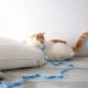 Funda plastificada para colchón de gato