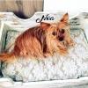 hogares granjero perro cama