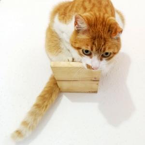 """¿Cómo tener a tu gato contento? Crea un parque de estimulación combinando el """"Step"""""""
