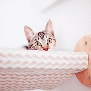 6 preguntas para saber si tu gato es feliz