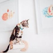 hamaca gatos colgada altura