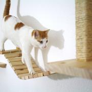 puente colgante gatos juegos