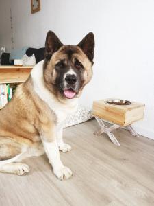 el comedero de los perros grandes