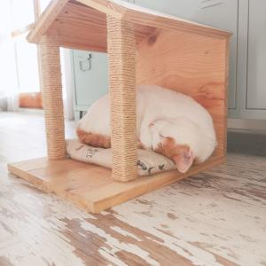 casita de madera para gatos